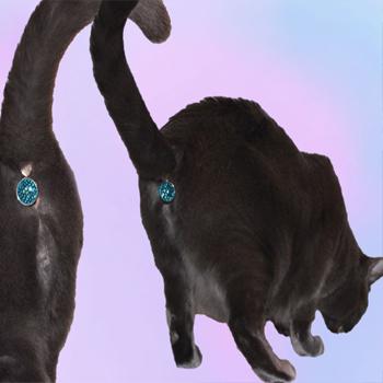 prob-twinkle-cat